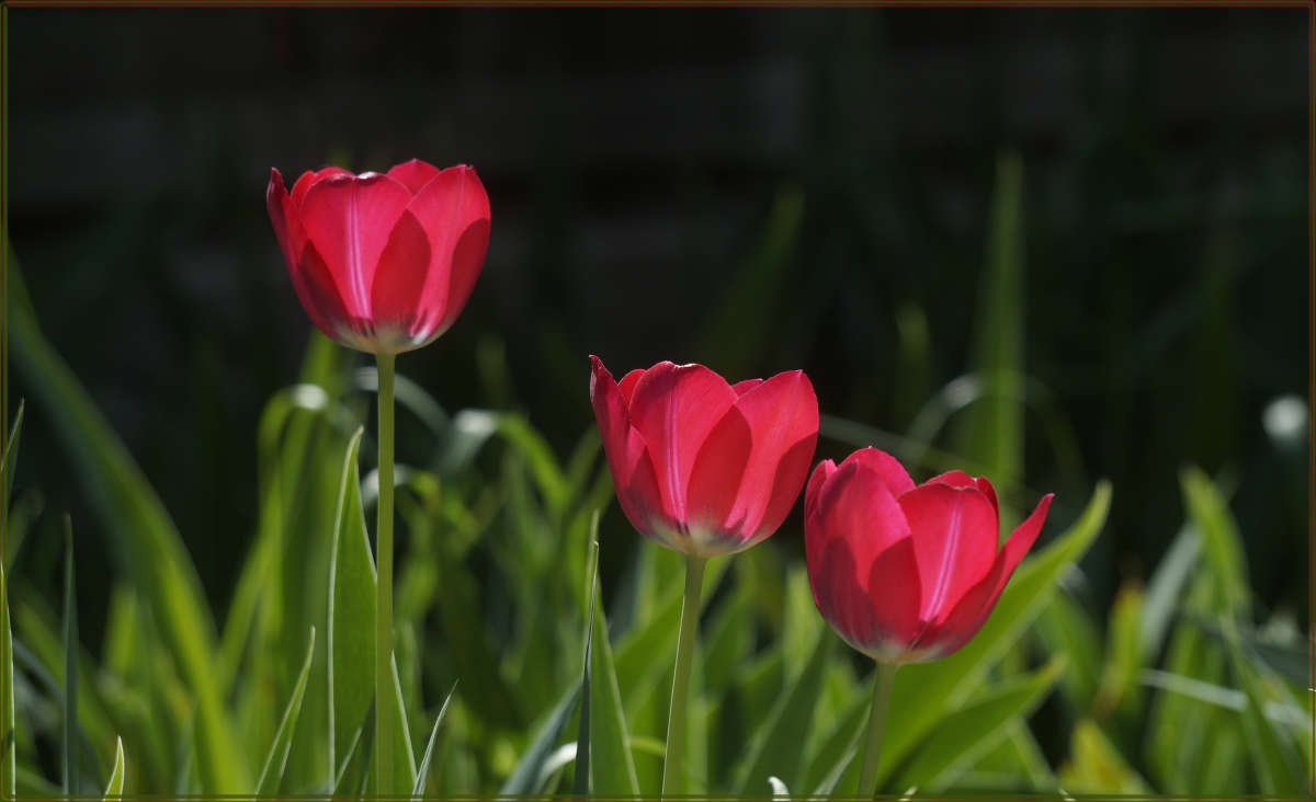 """""""Три цветика цветочка"""""""