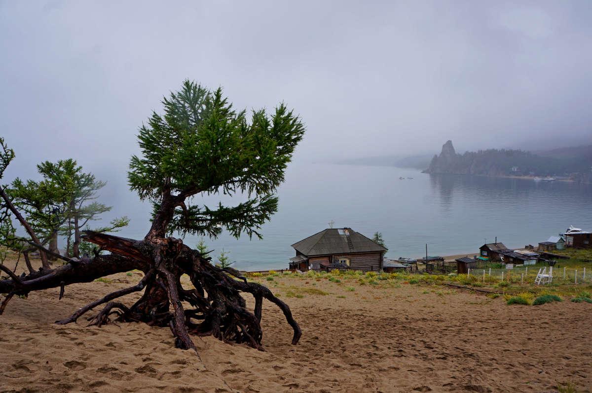 Ходульные деревья. Байкал.