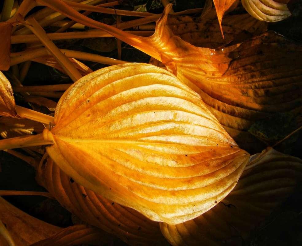 Осень — это вторая весна, когда каждый лист — цветок ©