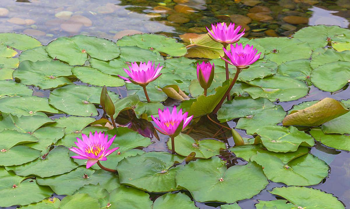 Цветы парков Гонконга
