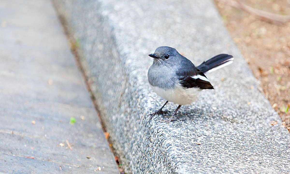 Птицы парков Гонконга