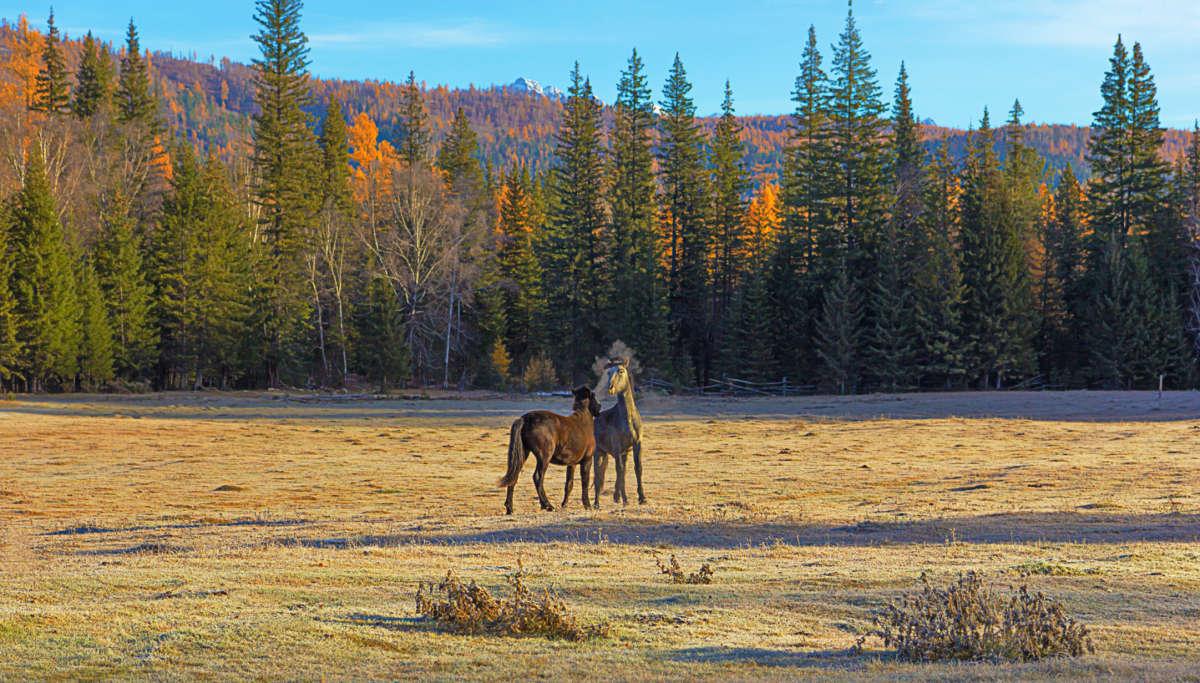 Игра молодых лошадок