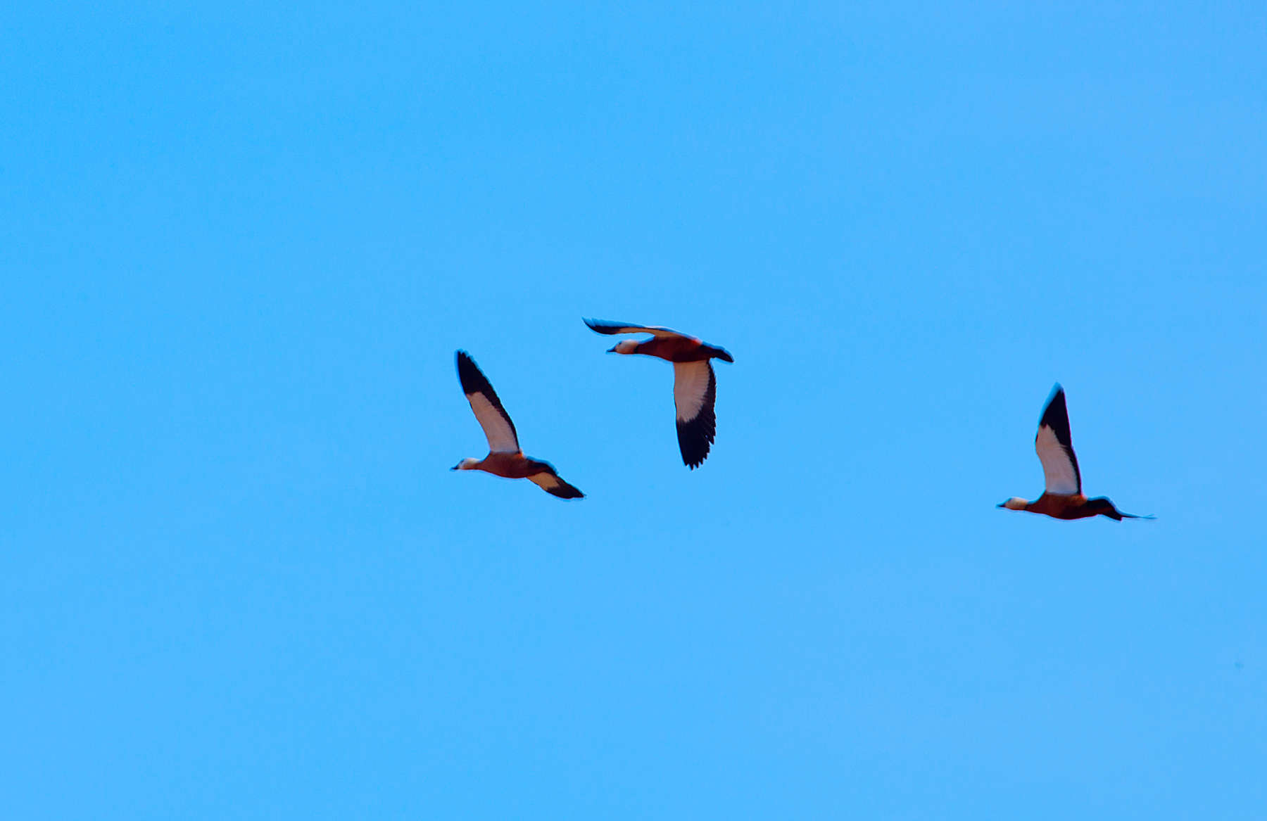 Летят утки