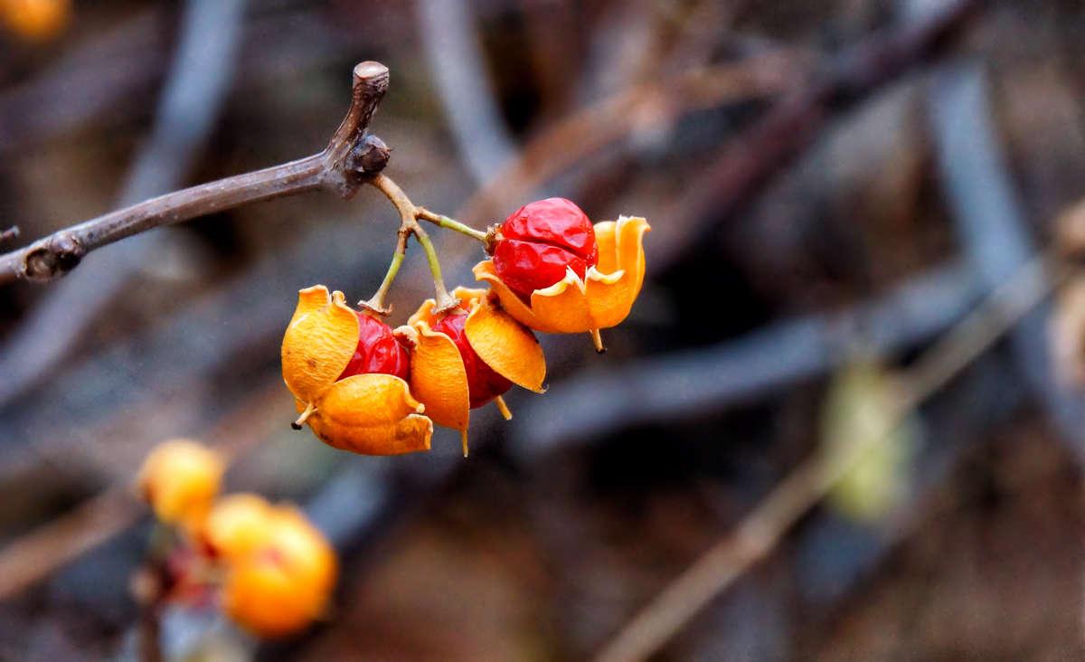 Гранатовые лимончики
