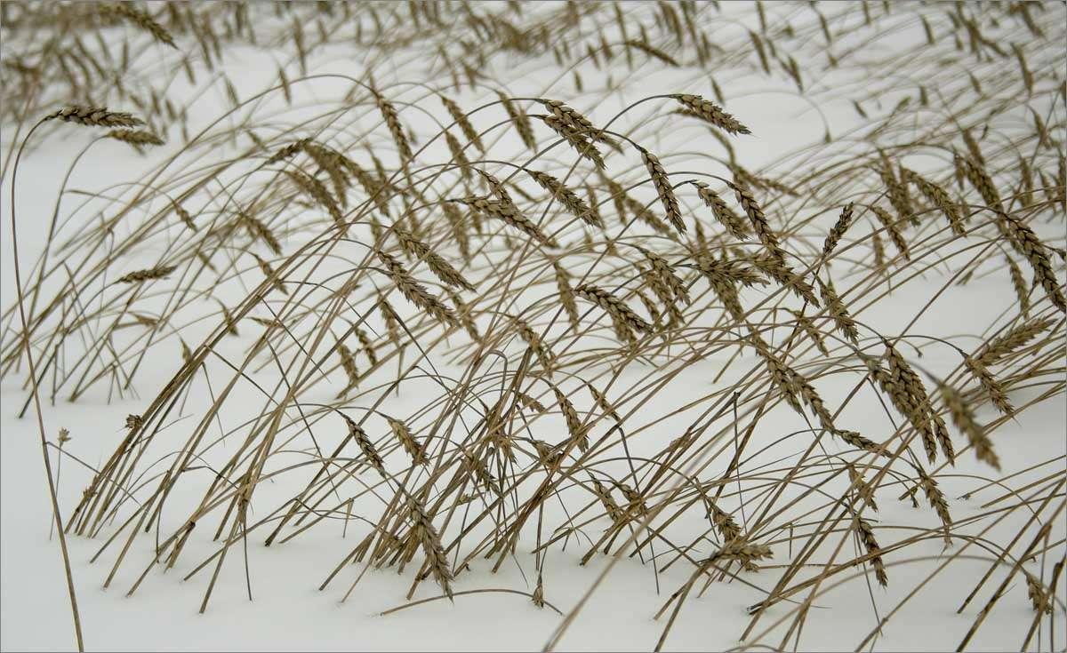 Зимние травы-4..