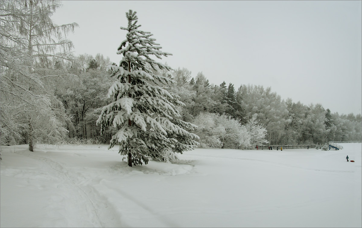 Зимний лес-3