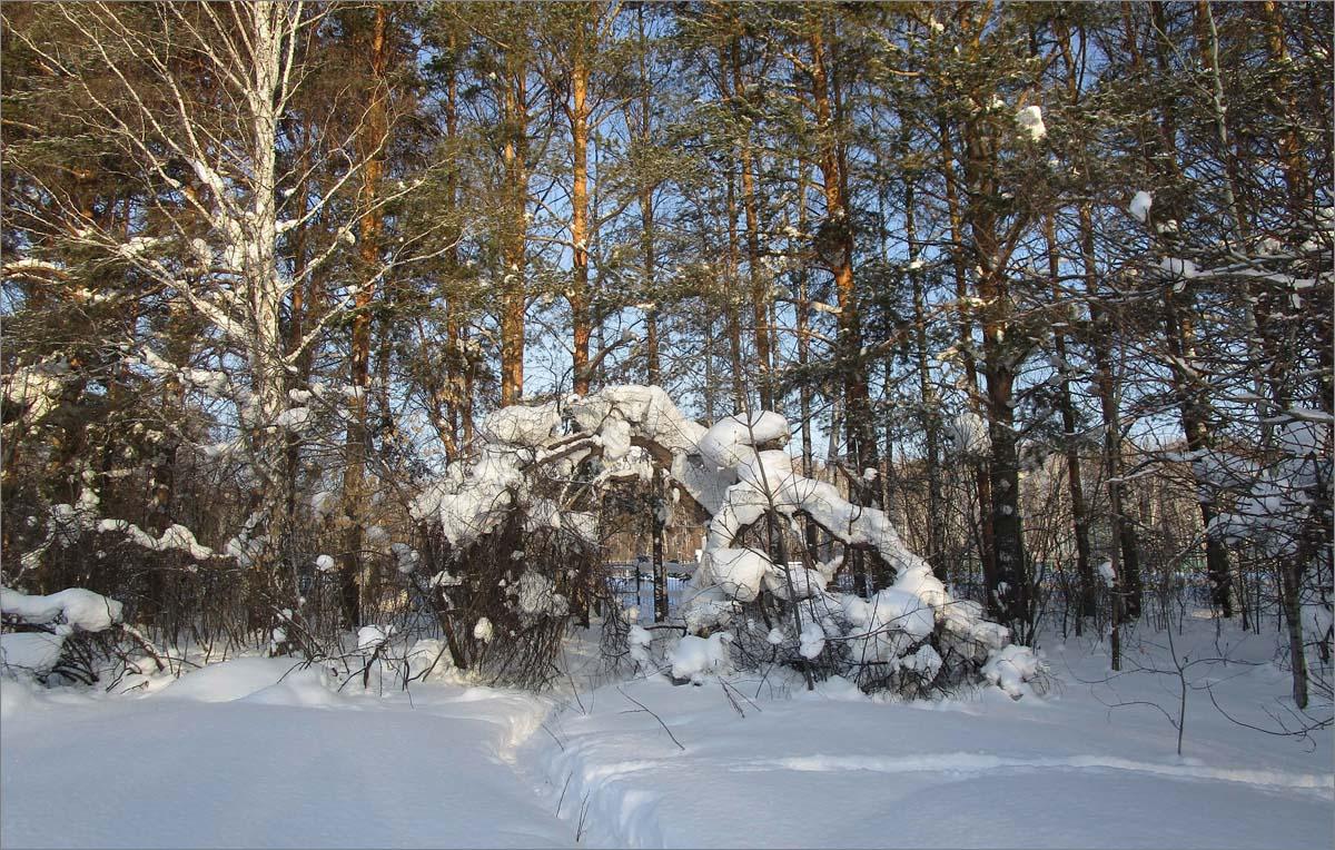 Зимний лес-5 .