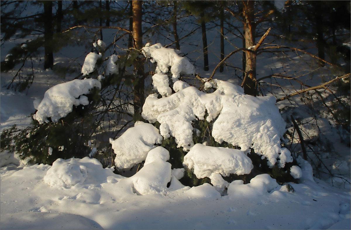 Образы уходящей зимы..