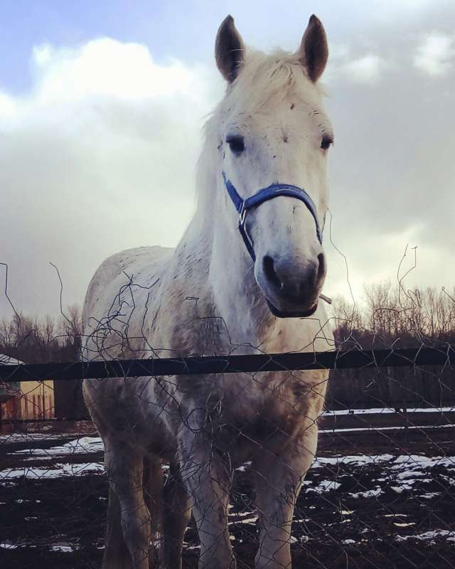 Верный конь