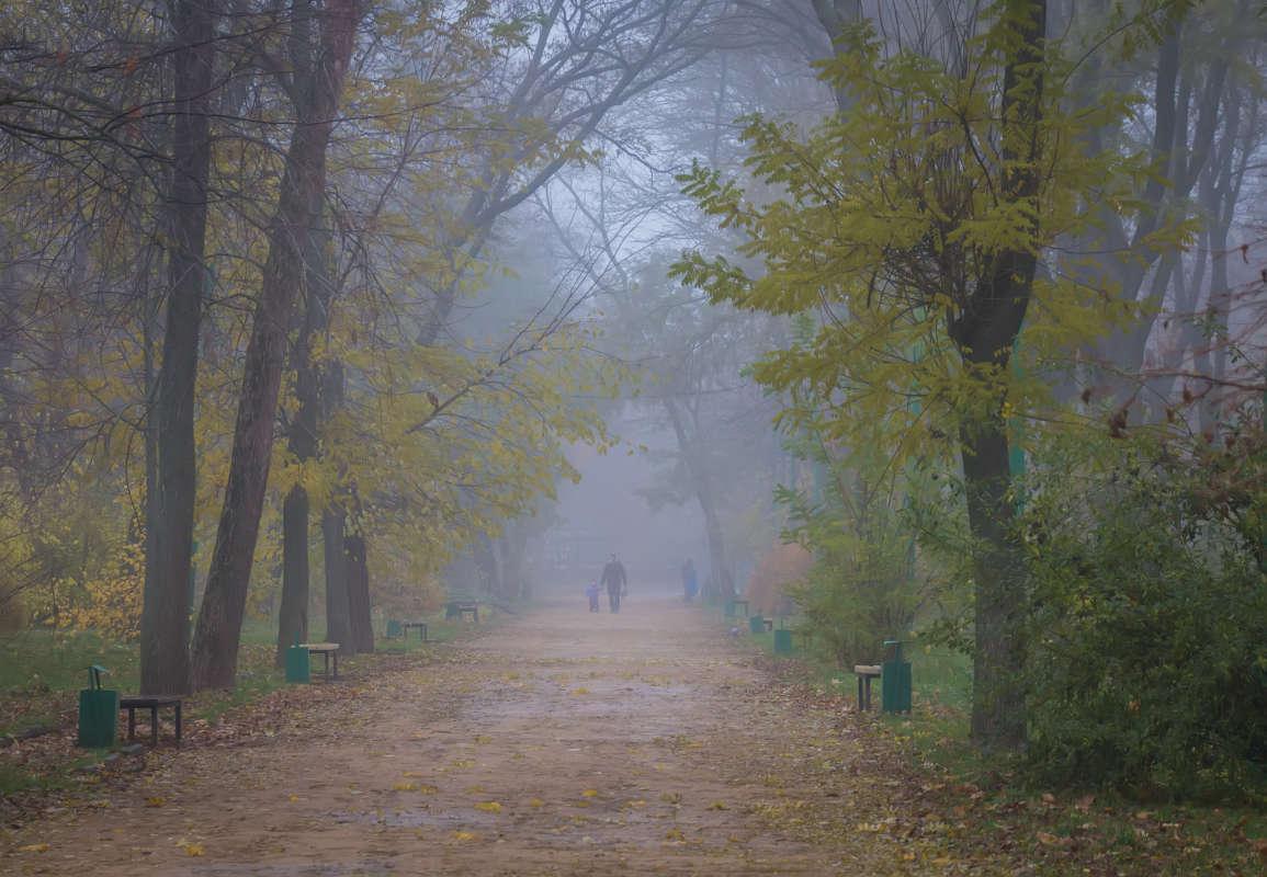 Туман в  городском парке