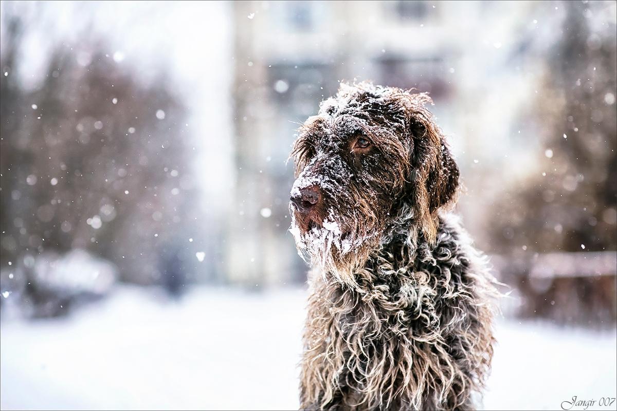 Зимний портрет друга