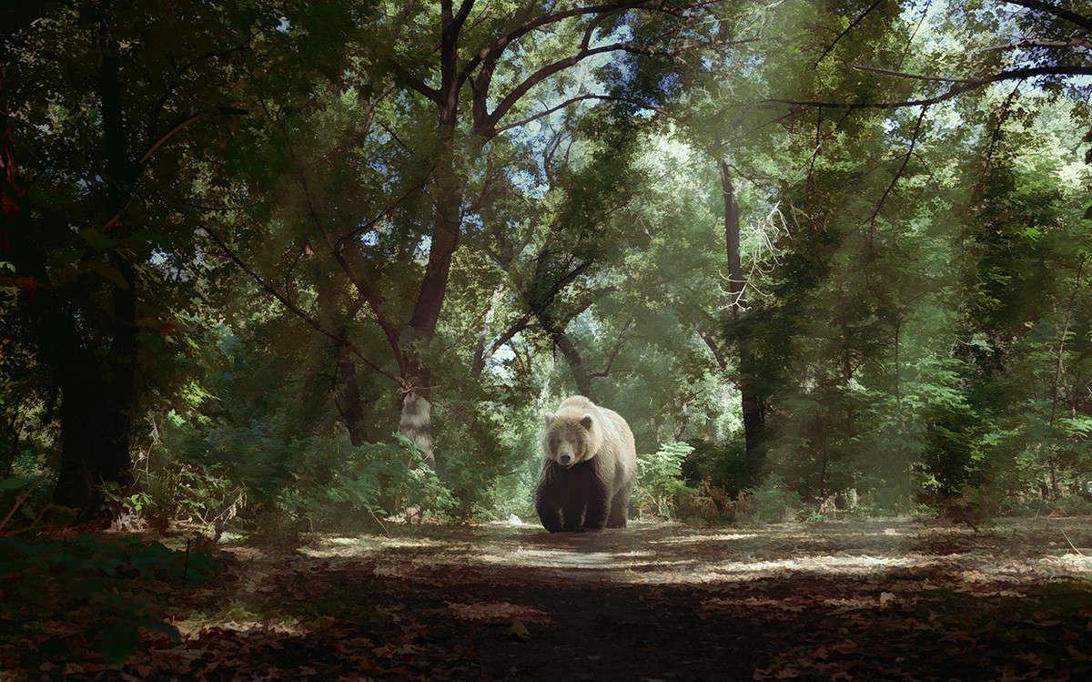 Sunny Morning Bear in Watercolor