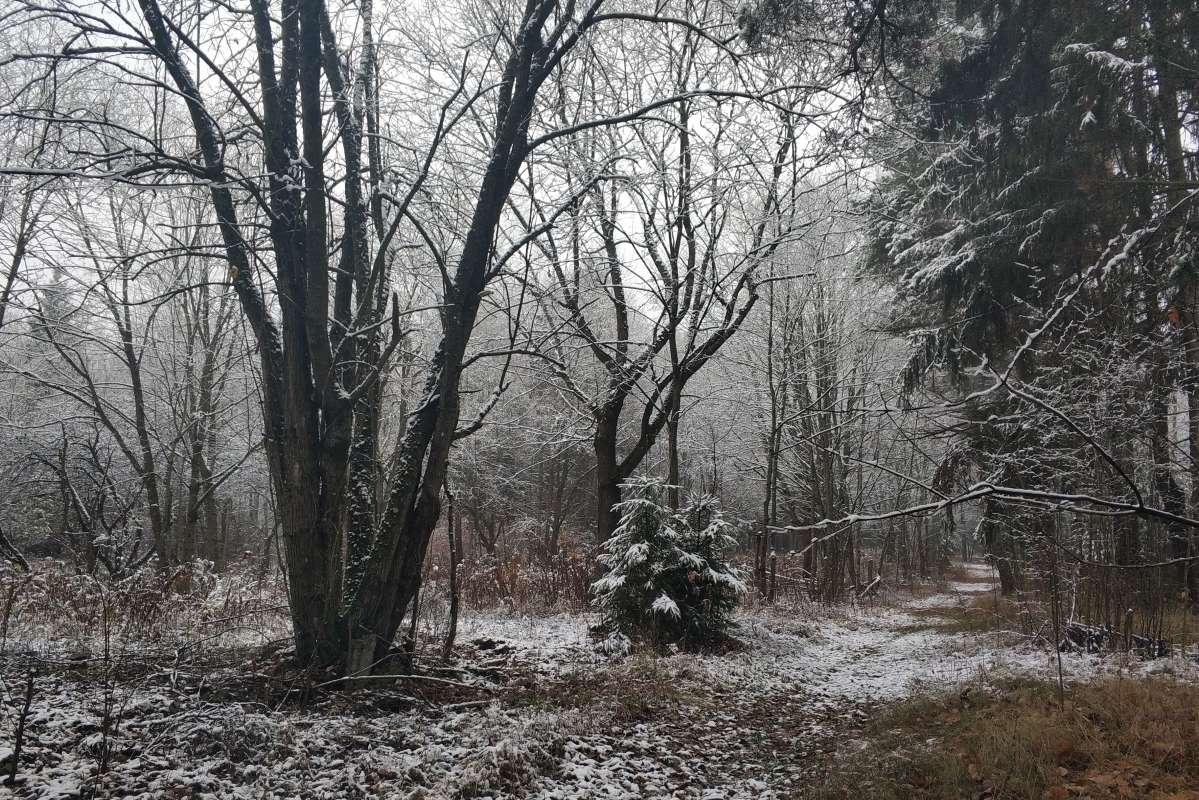 Первый снег..