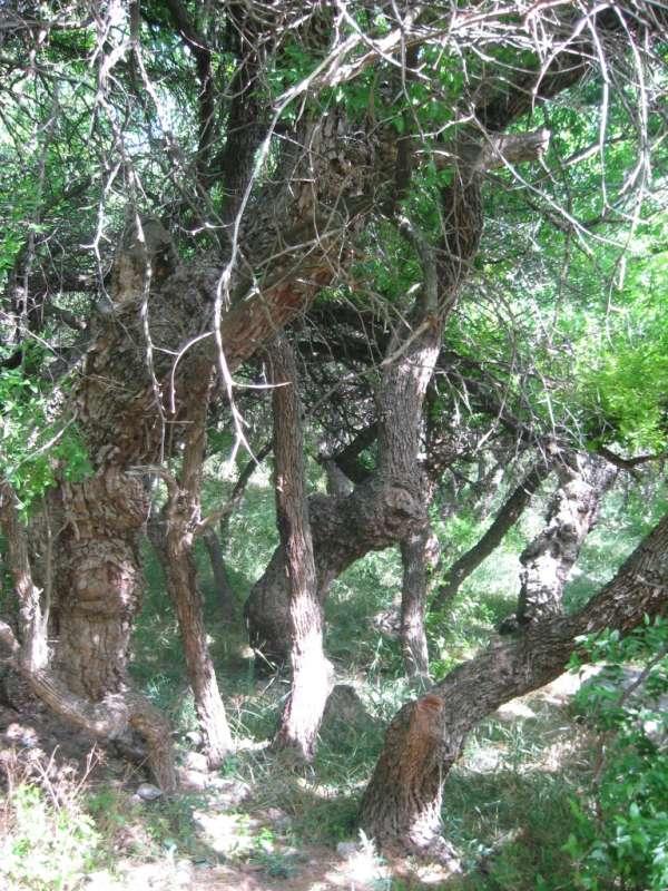 деревья унаби...