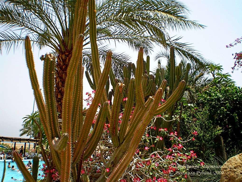 На побережье Мёртвого моря