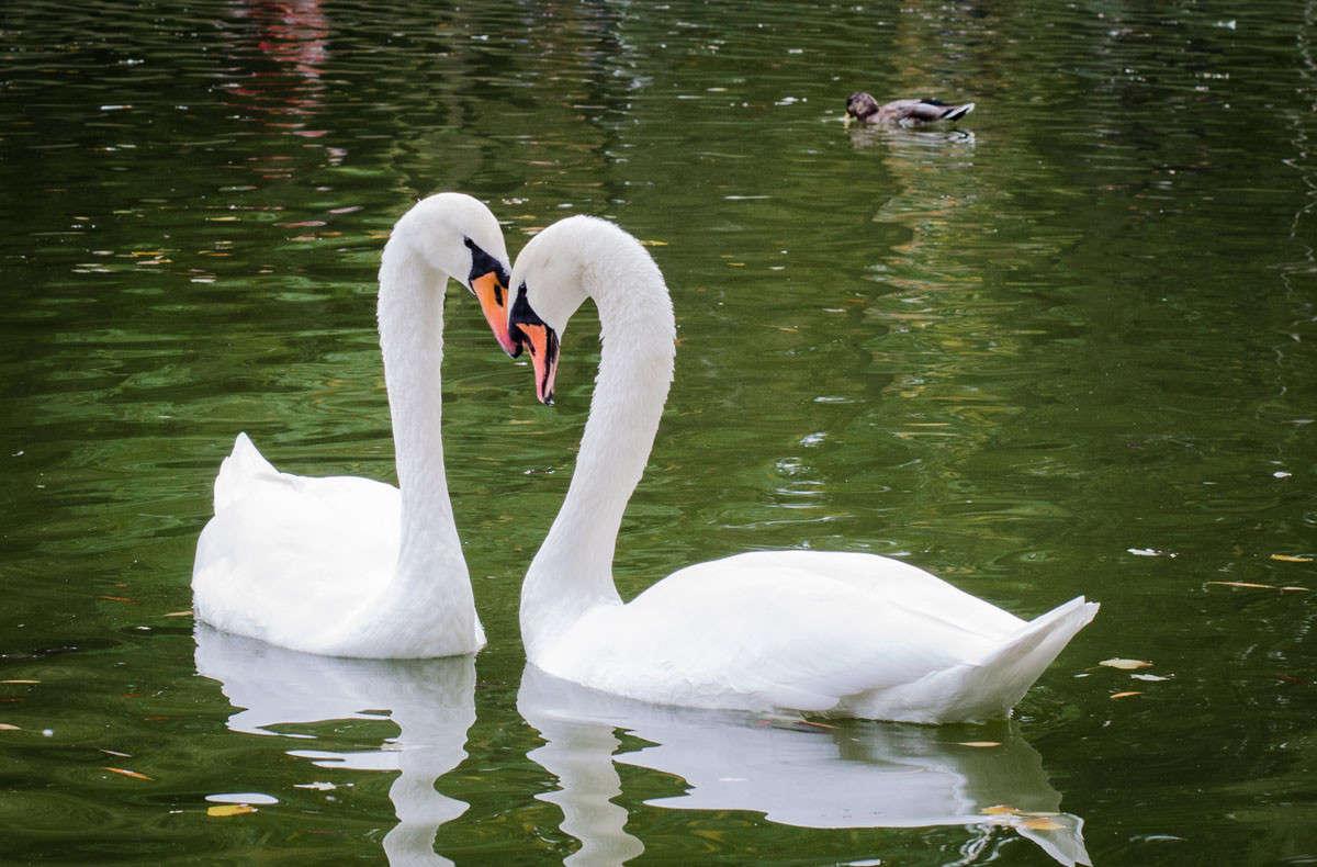 Вечная любовь...