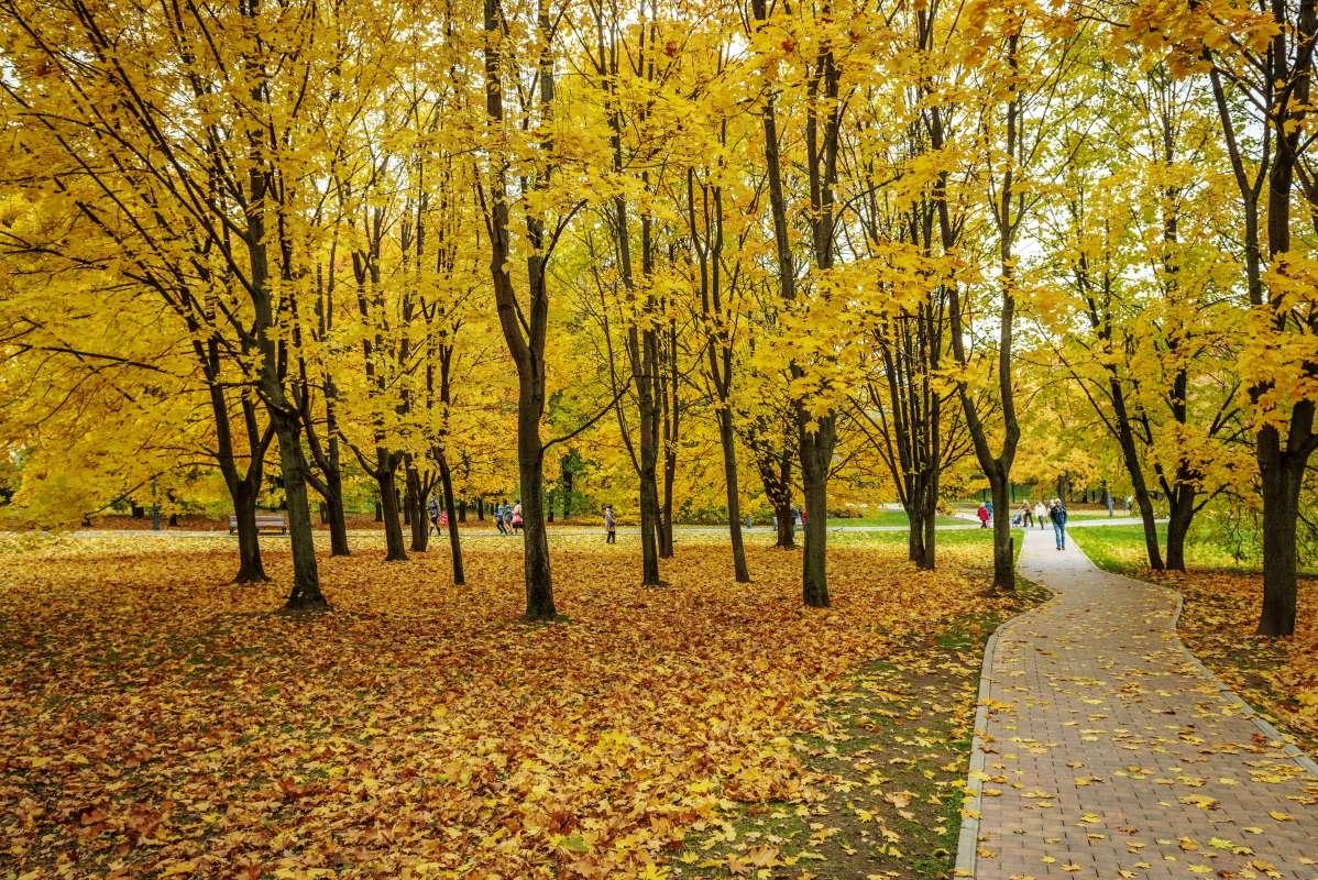 Московская осень..