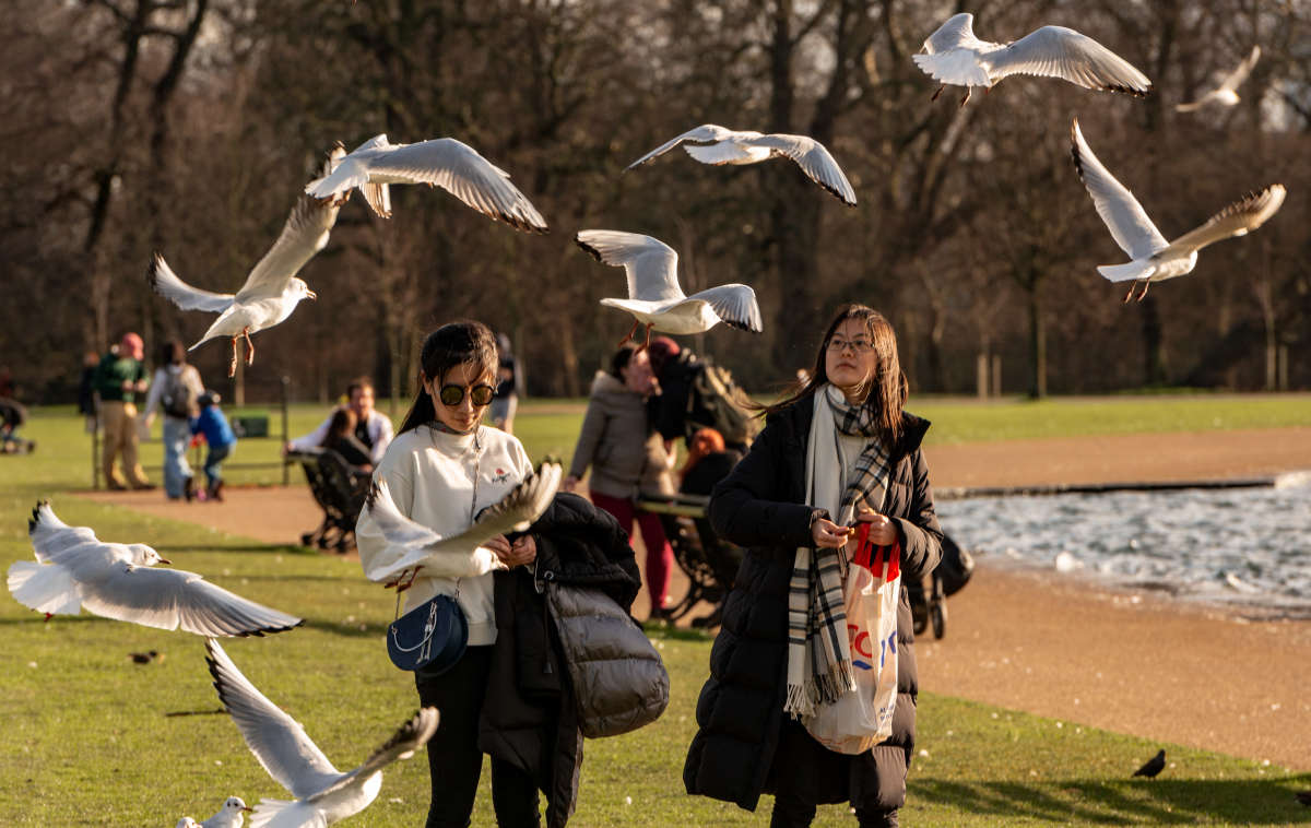 Люди и птицы. Hyde Park.