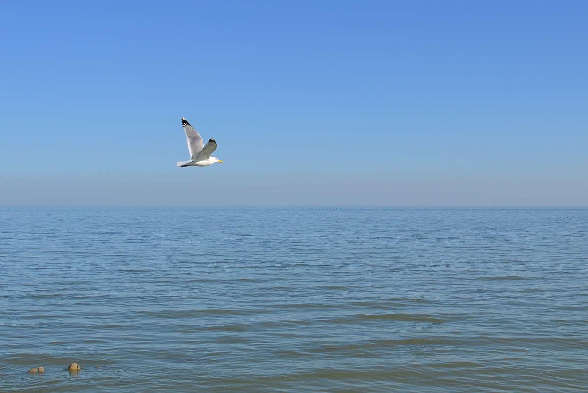 Парит над водой
