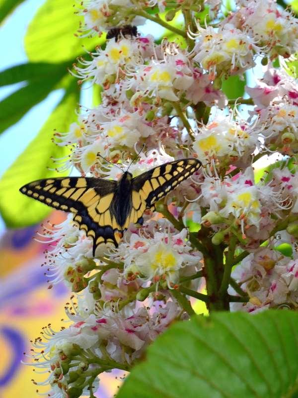 Бабочки весны