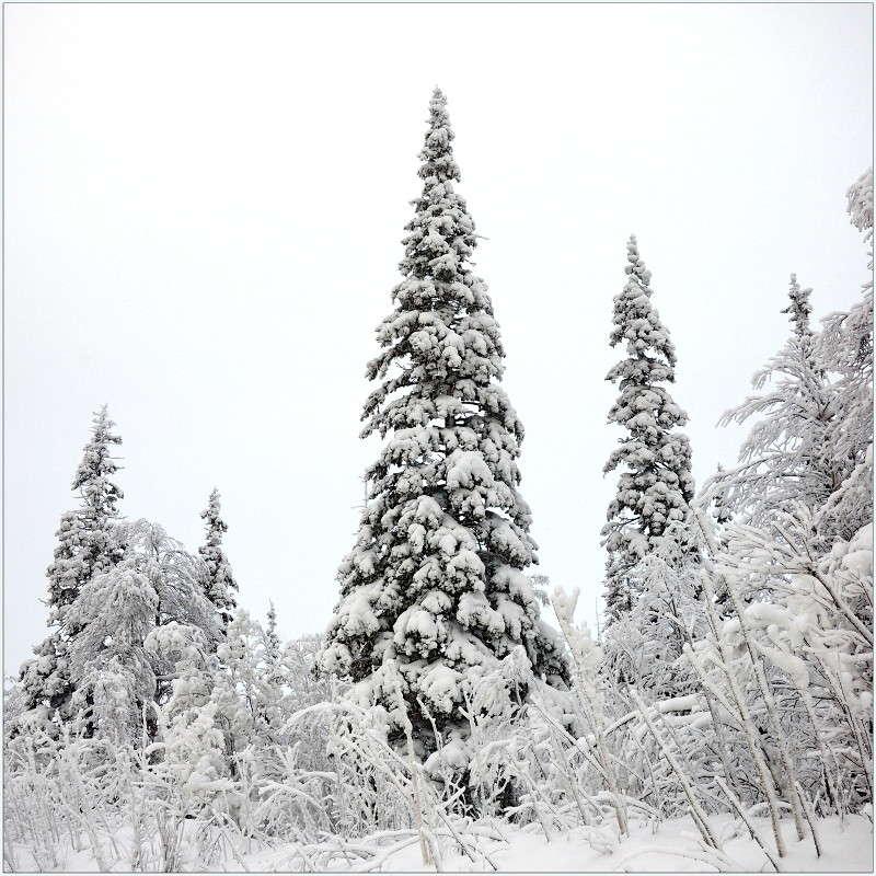 Заполярная зима.