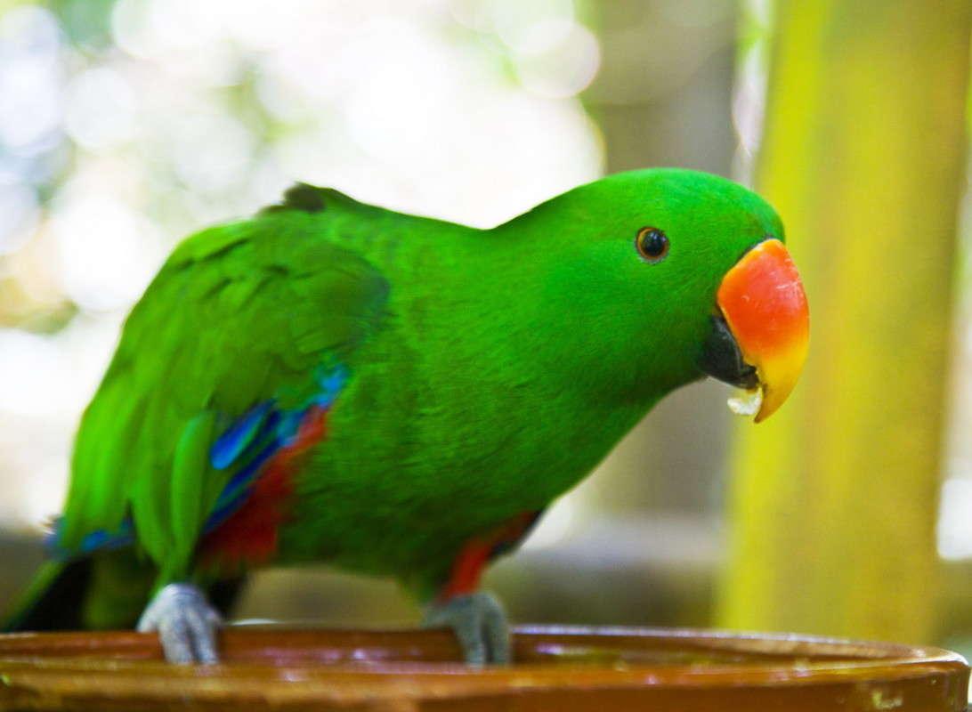 фото попуган все