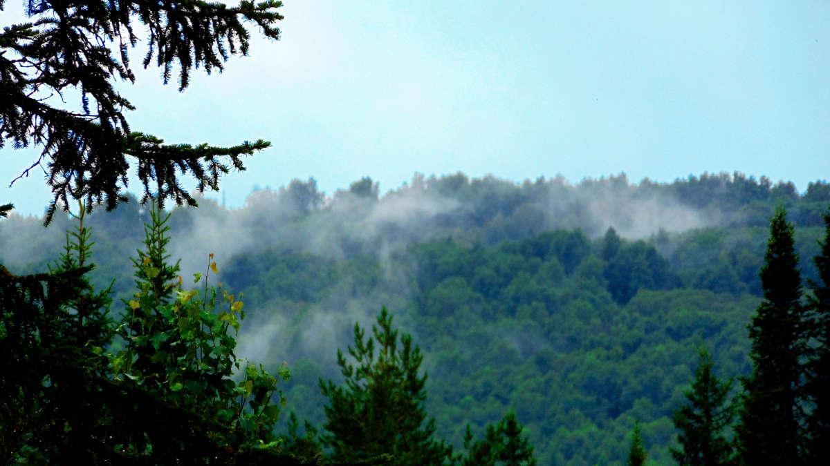 Дыхание леса