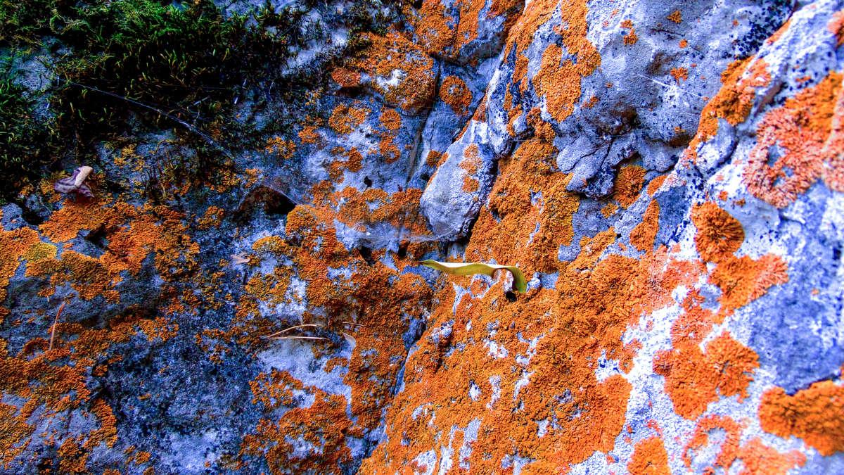 Каменная ржа