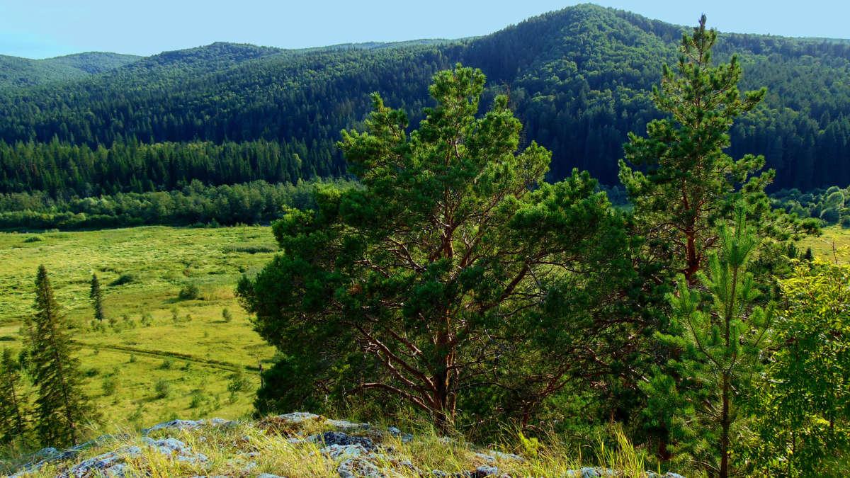 Сосново-еловые леса