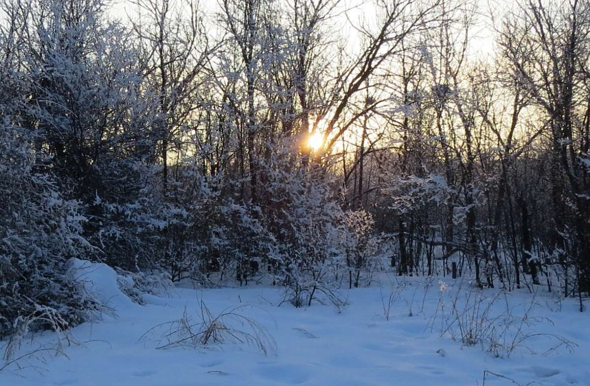 Зимние картинки 3