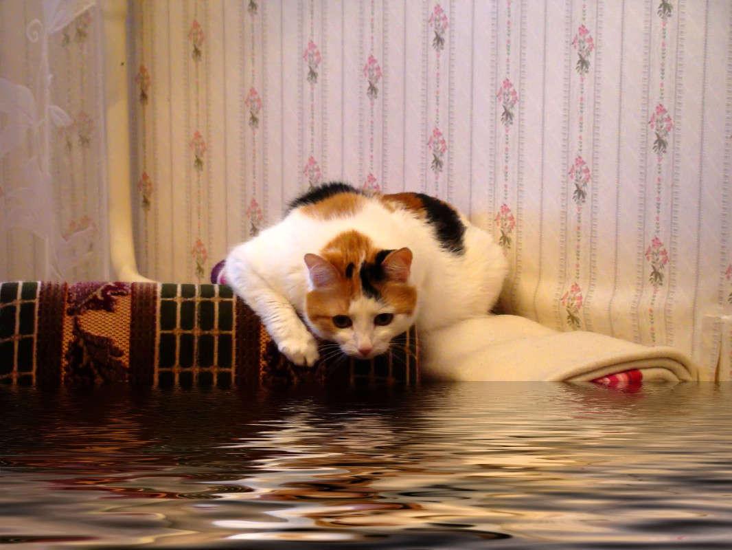 уме, затопило соседей в мое отсутствие вижу, что