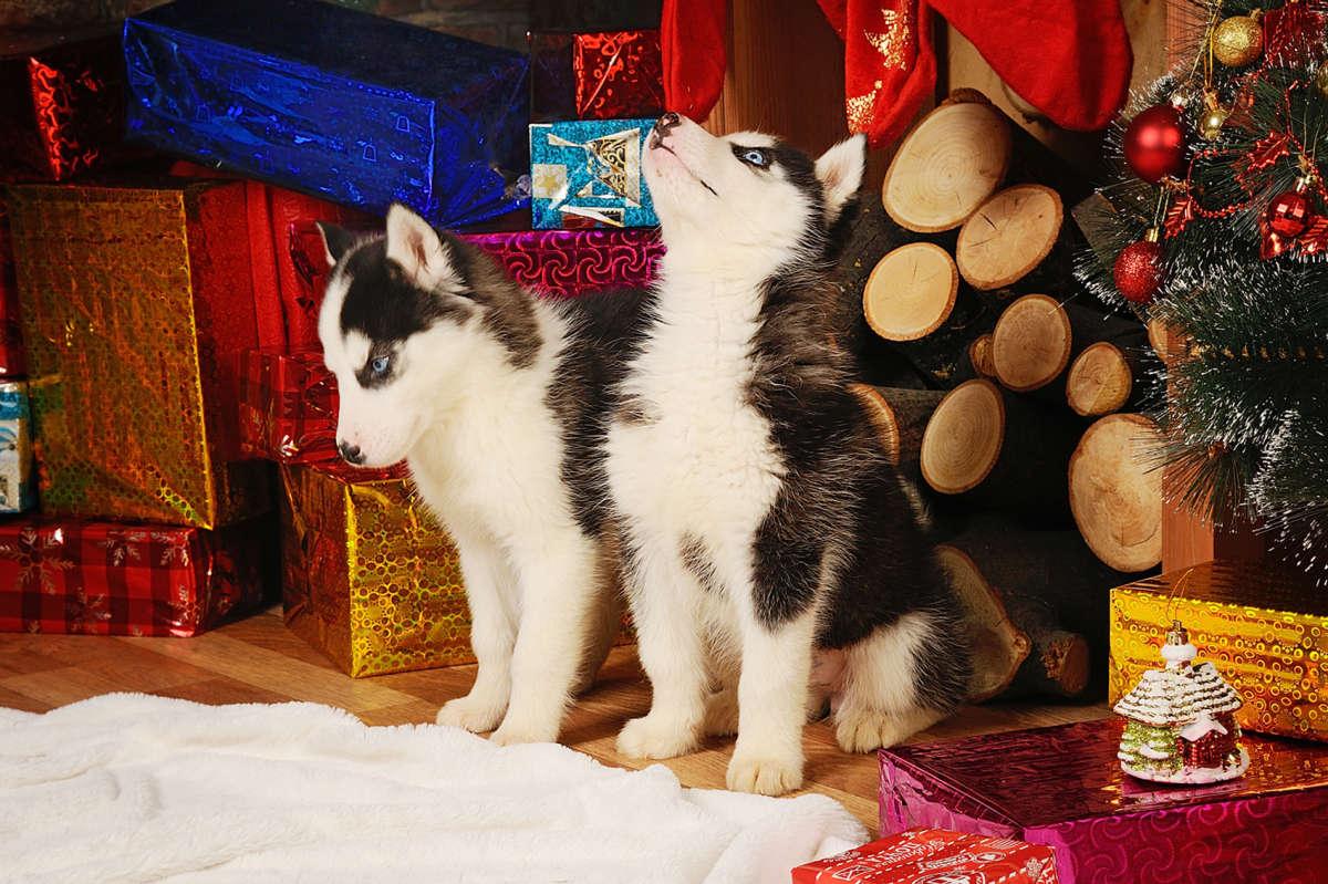 Люся и Люся