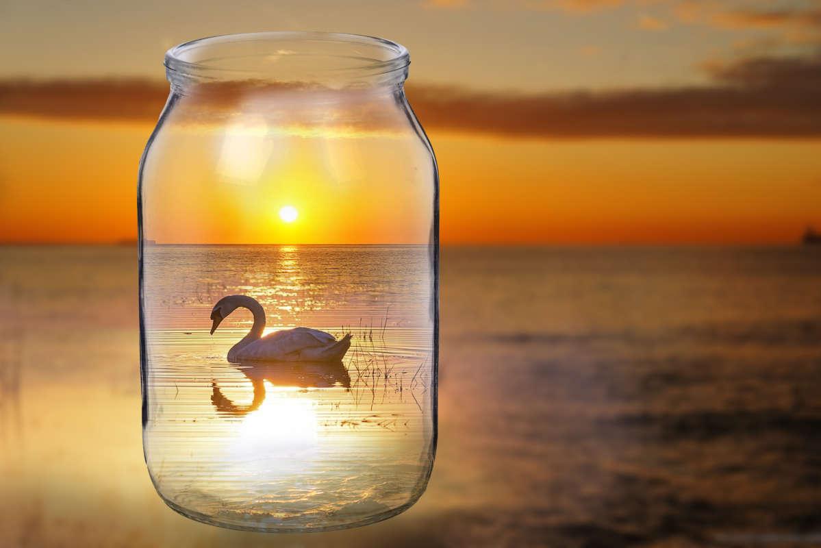 Коллаж лебедь
