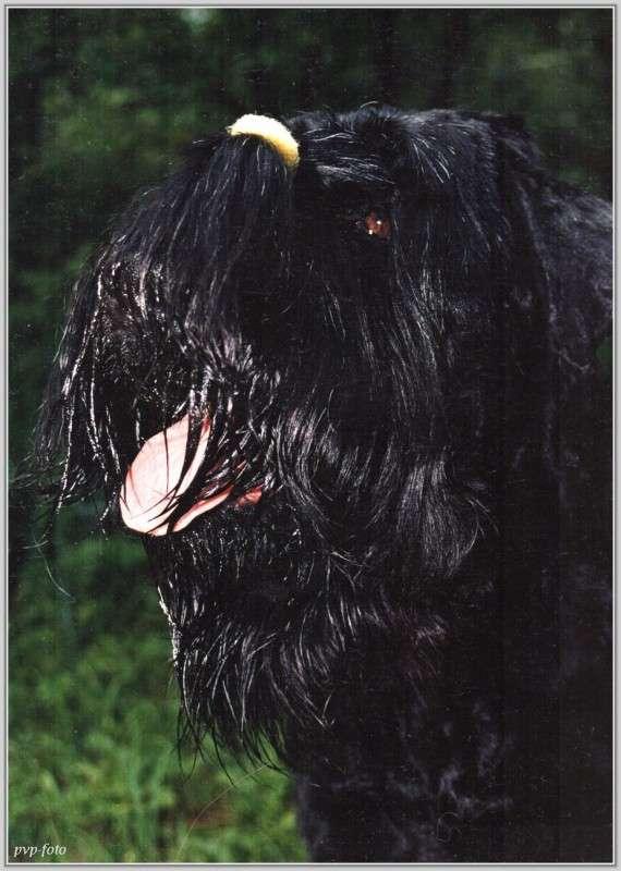 Портрет черныша