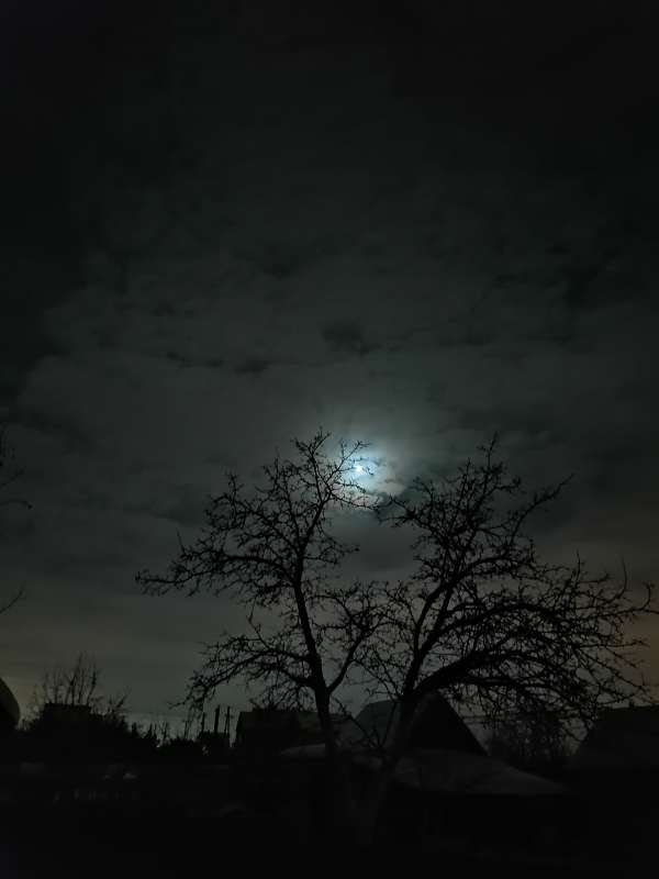 Луна в деревьях