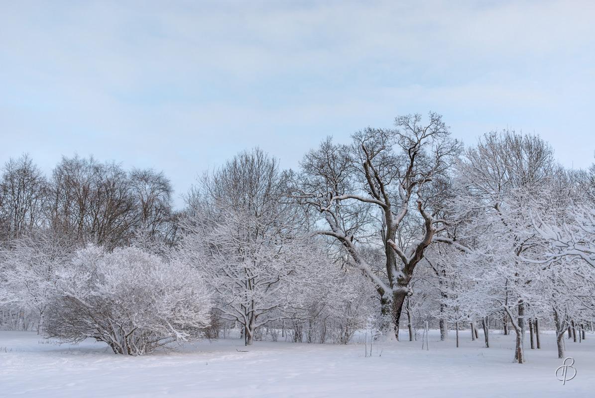Зимние сумерки  2