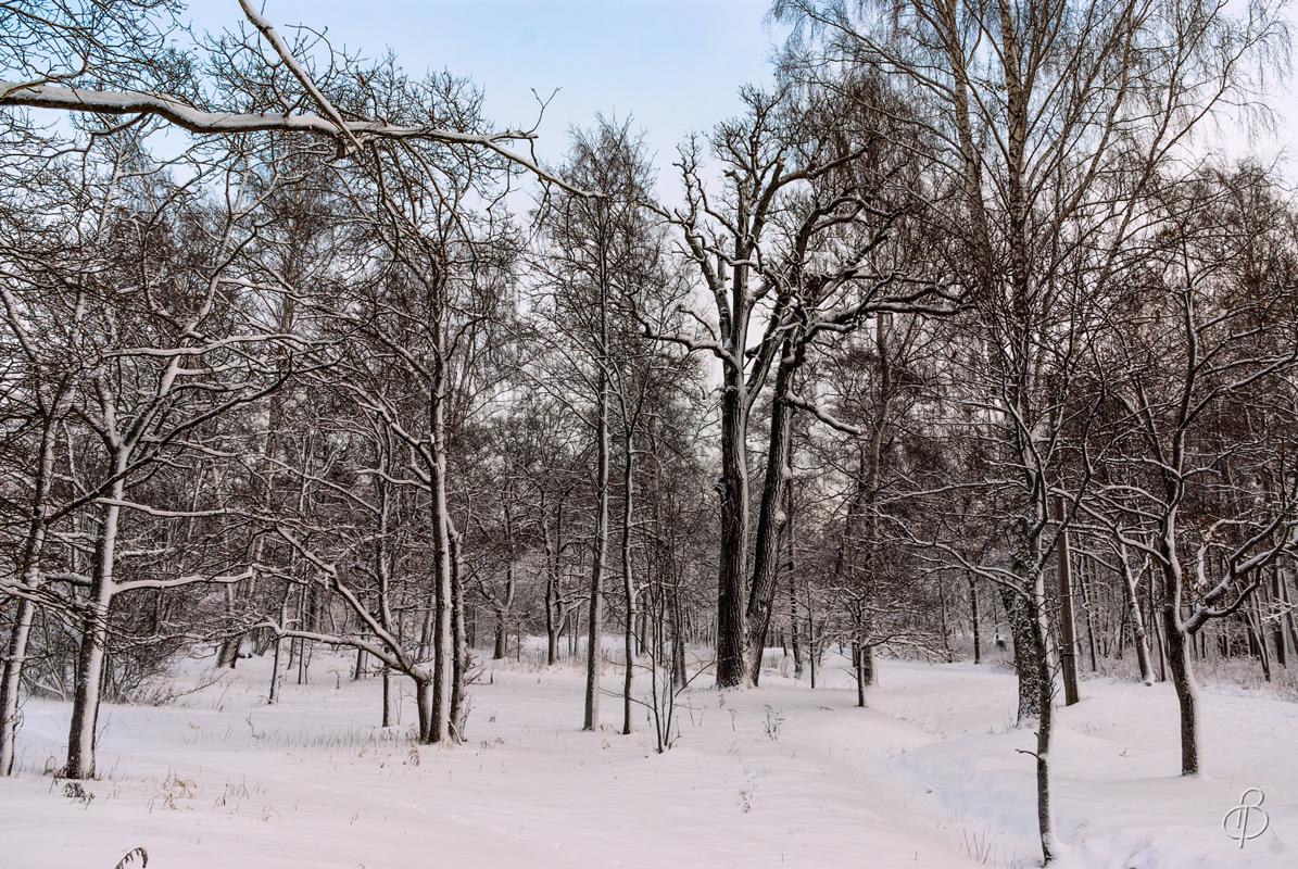 Зимние сумерки 5