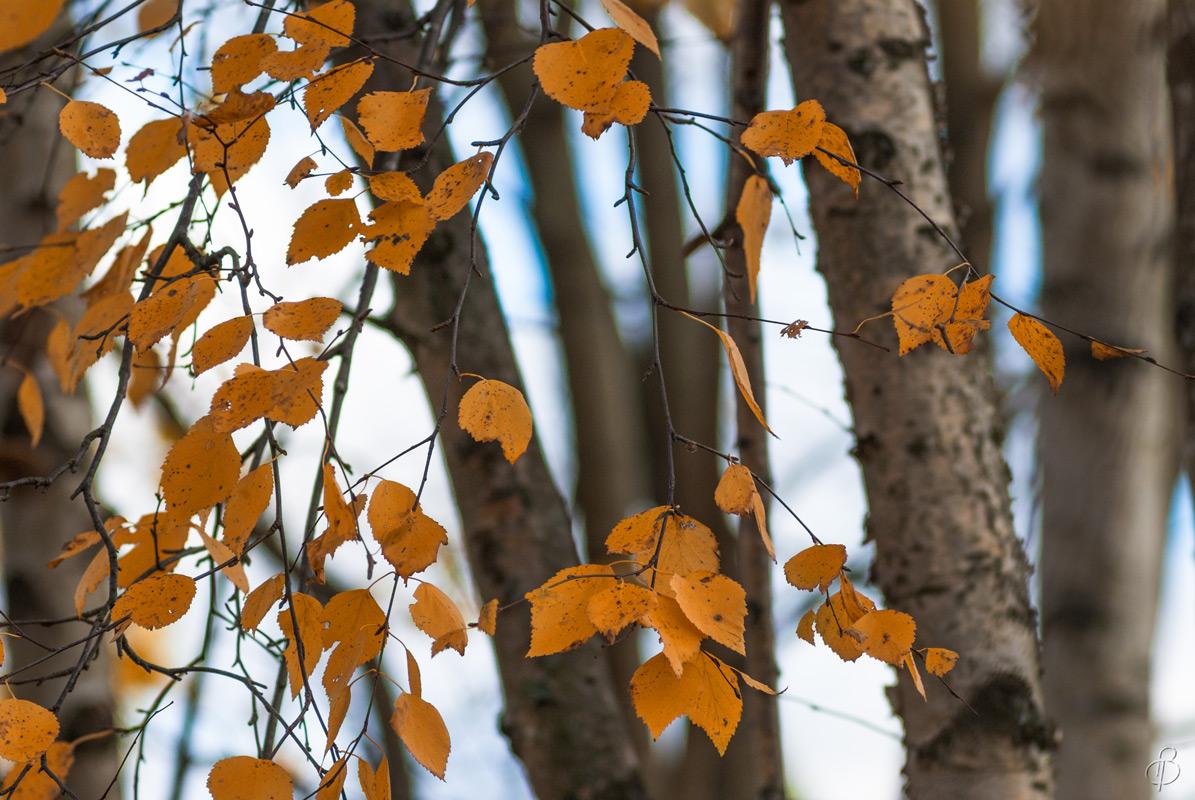 Осенний этюд 2
