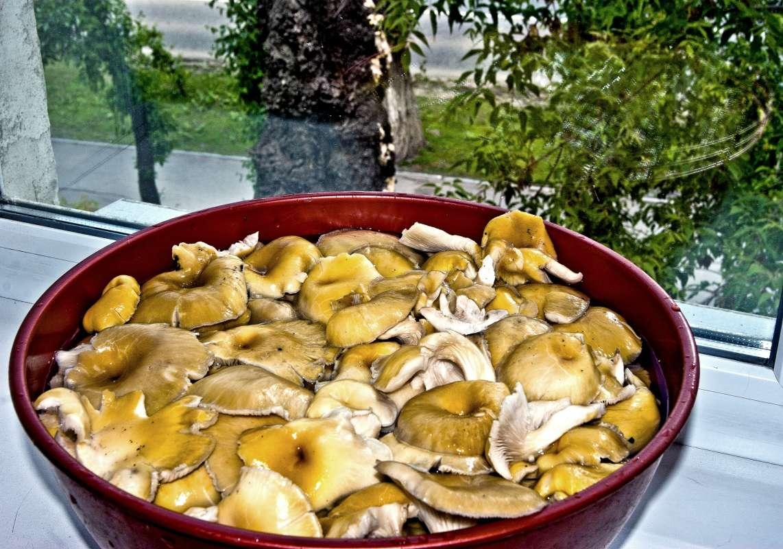 Там, за окном, тот самый грибной огород на пне