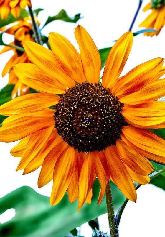 Самый большой цветочек!