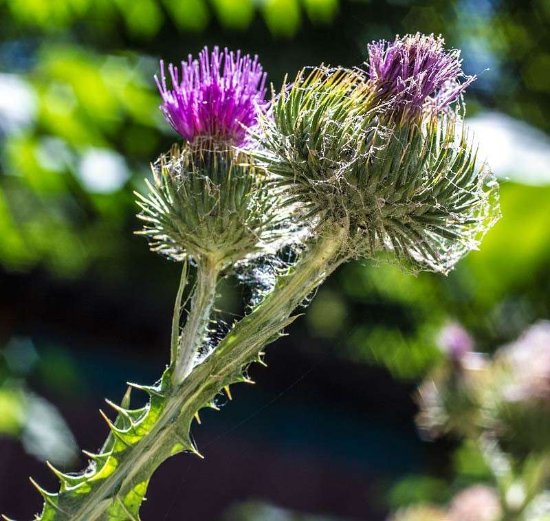 Фото колючий цветок
