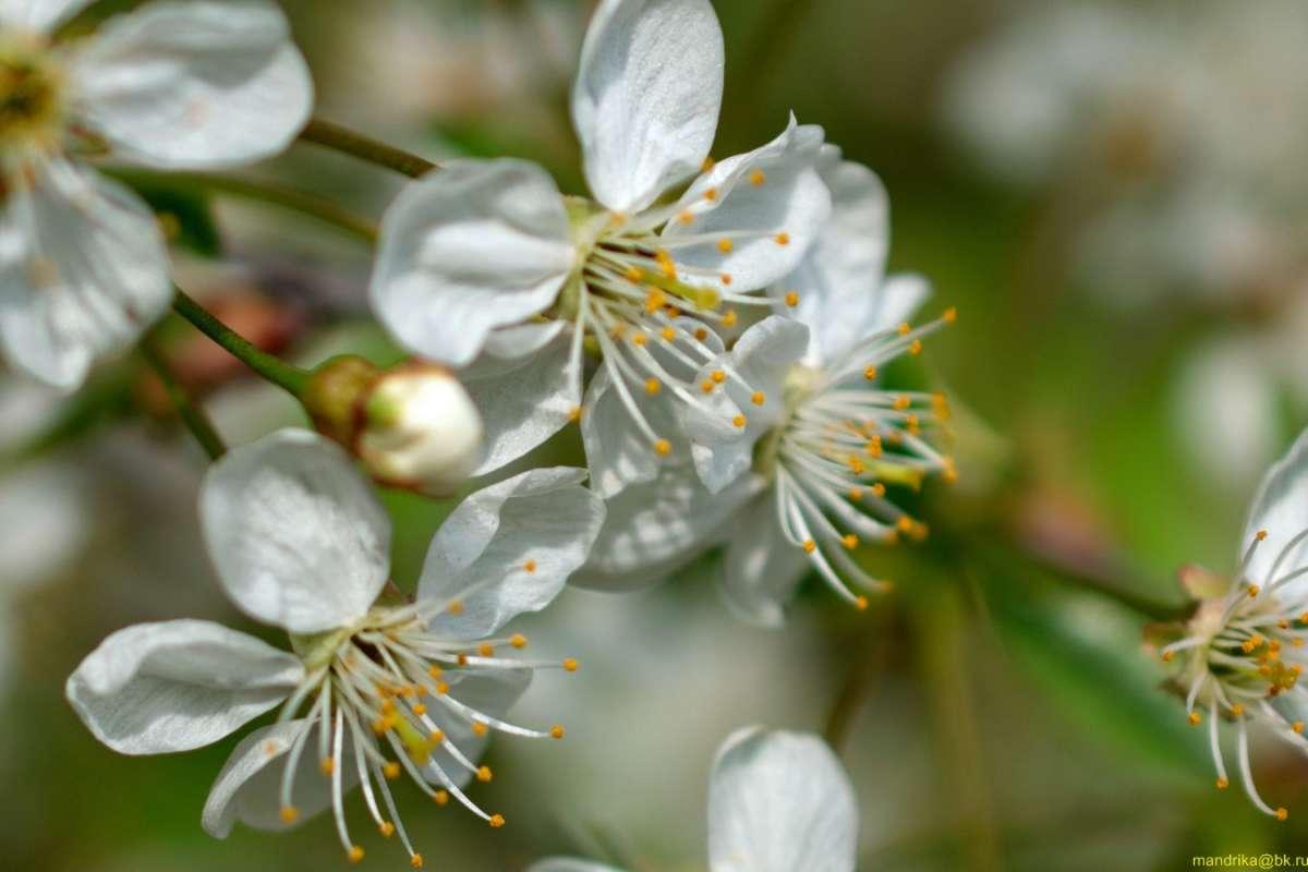 Когда весна в разгаре..Цветок расцвёл прилежно. 12.05.2019 г. (9)