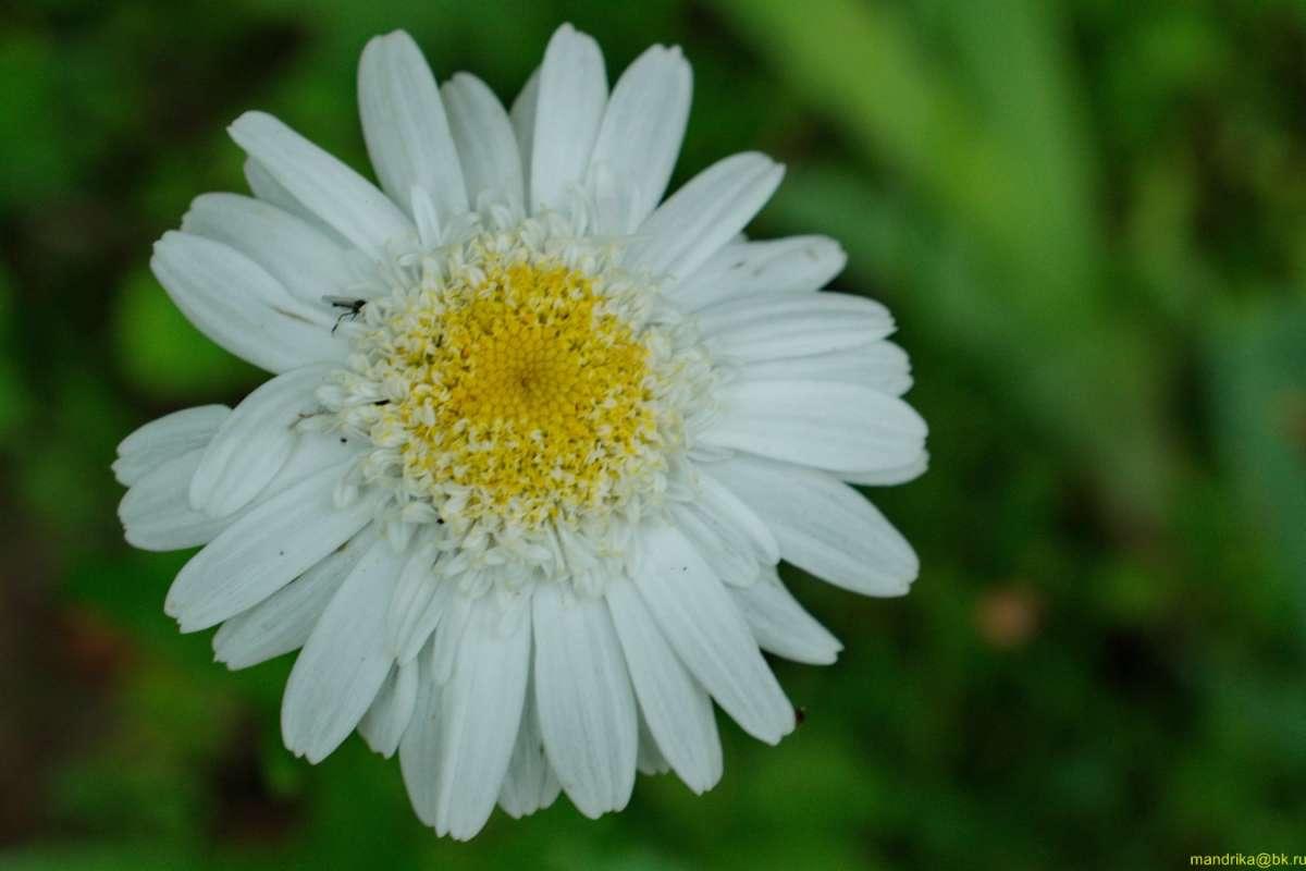 «Цветы у друга в саду». (9)