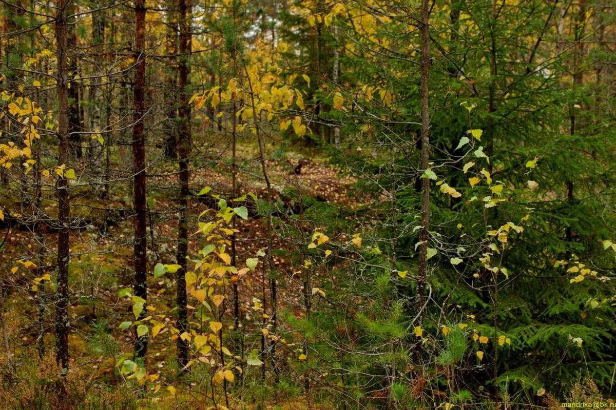 «В осенним лесу». (6)