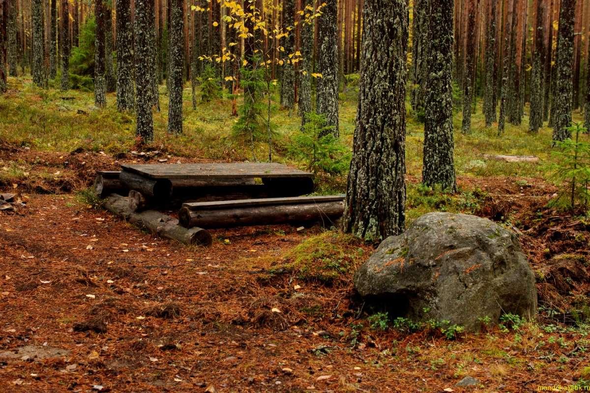 «В осенним лесу». (5)