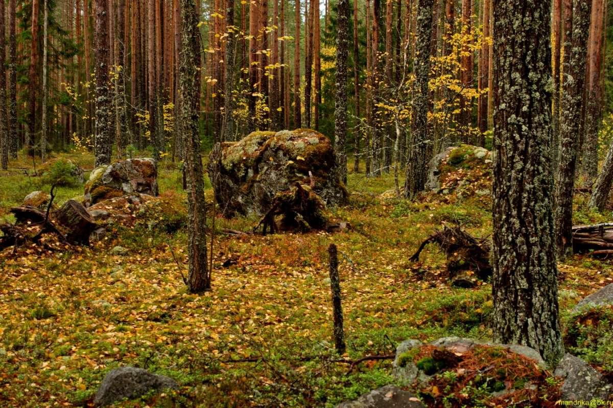 «В осенним лесу». (3)