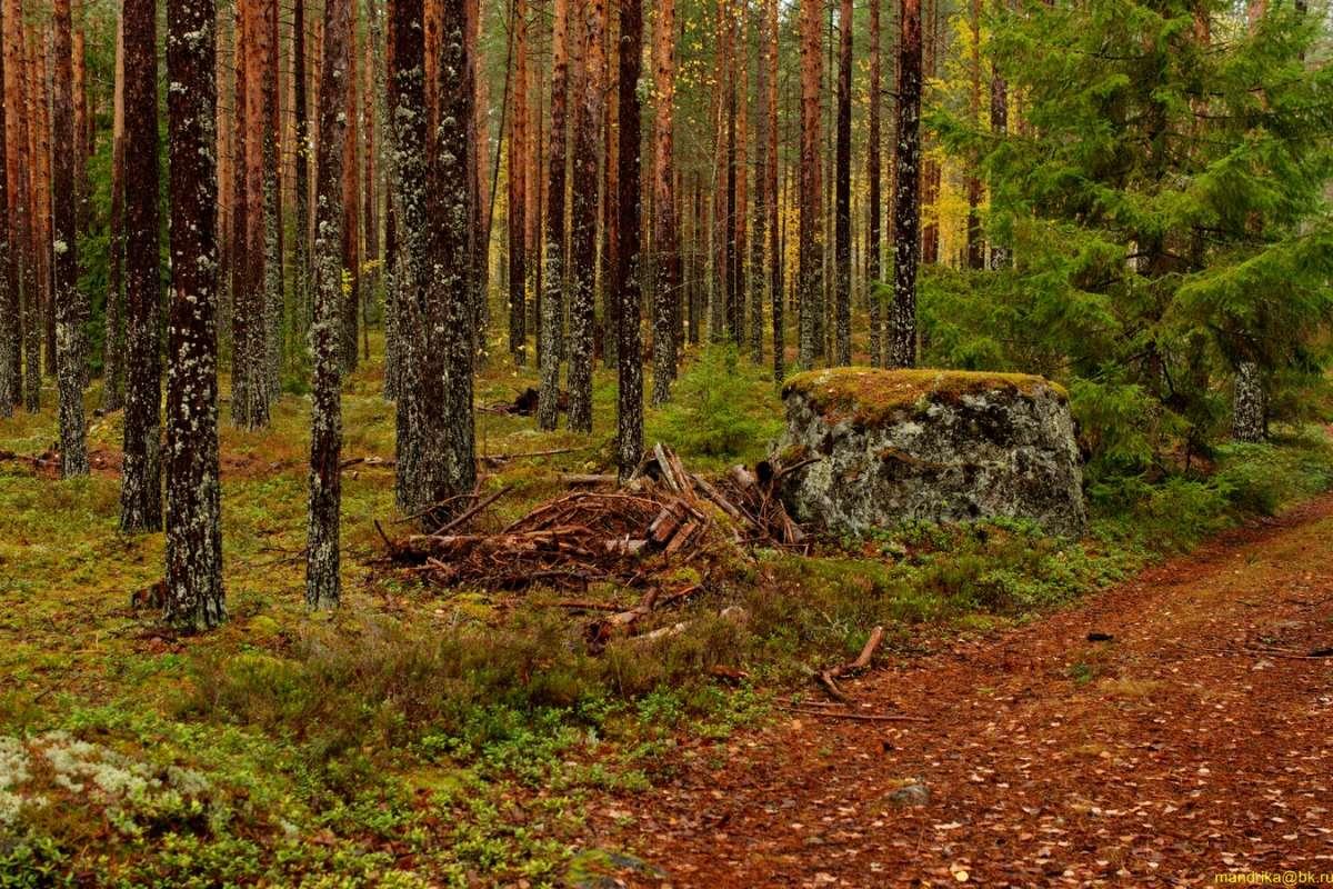 «В осенним лесу». (2)