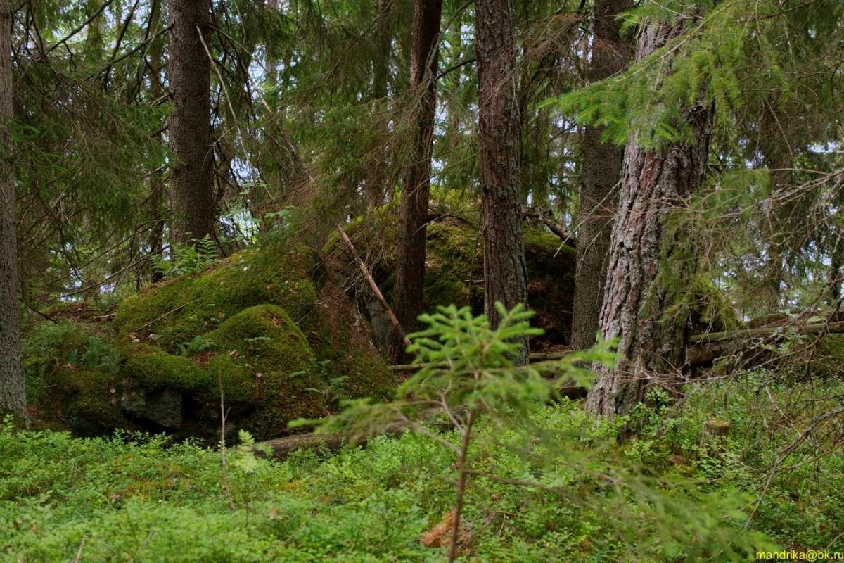 Камни в лесу. (5)