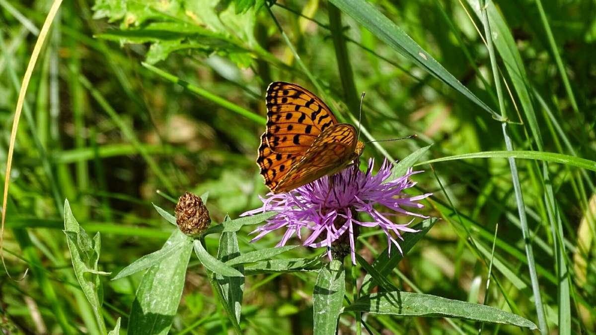 Про бабочек