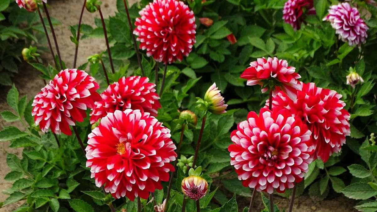 Городские цветы